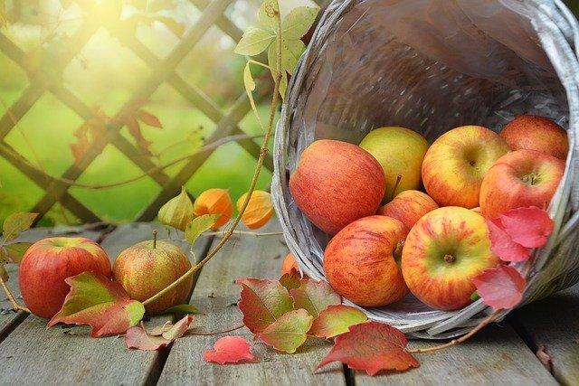 간 기능 식이섬유 풍부한 사과