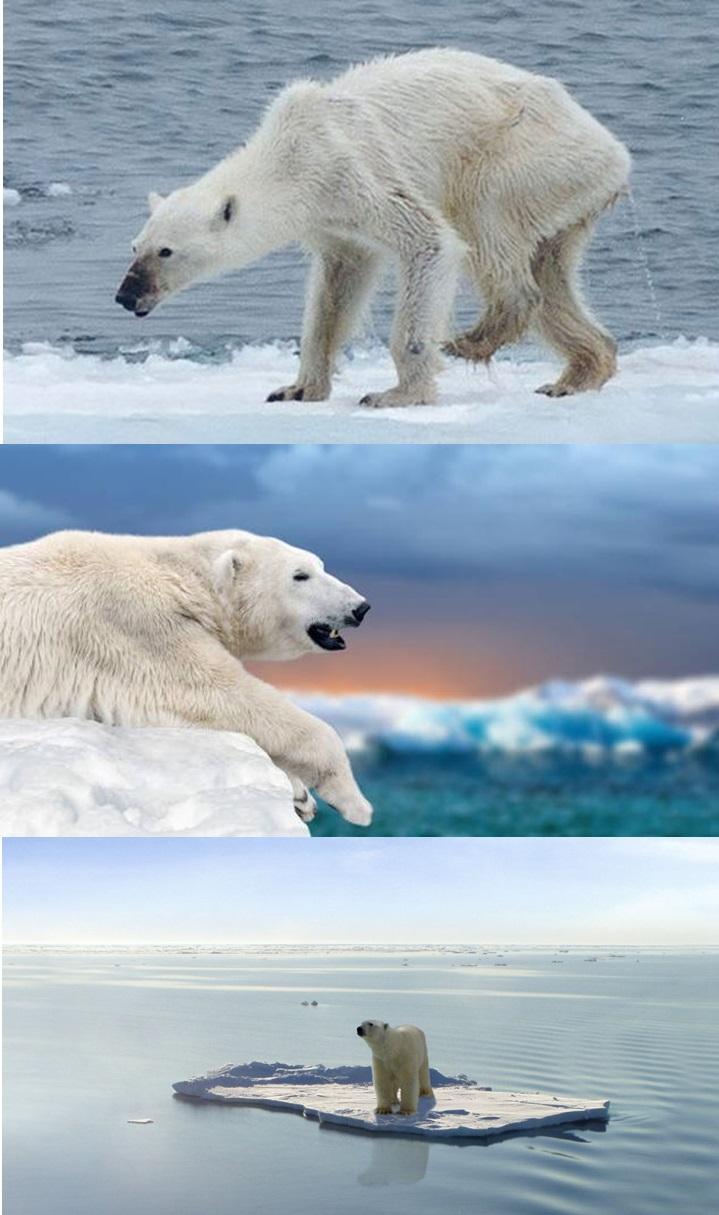 북극곰 귀여운 사진 5